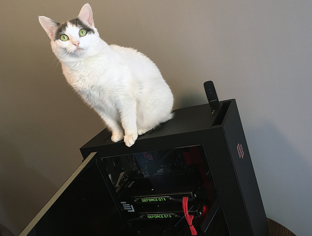big_maingear_vybe_cat.jpg
