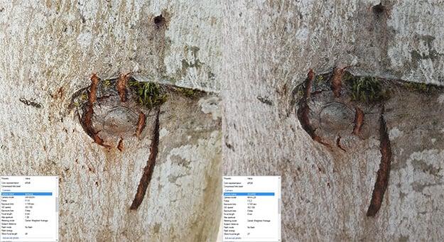 tree bark Note5vsMate9