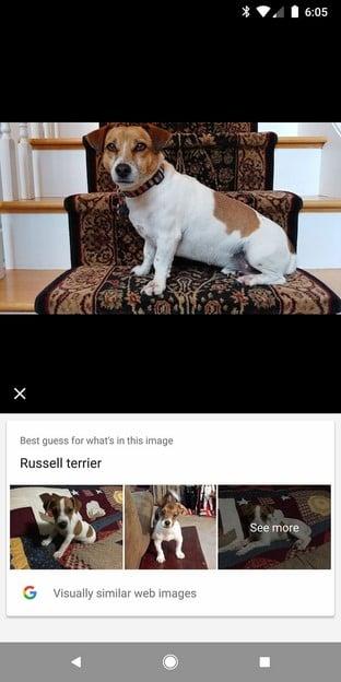 Russel Terrier Lens