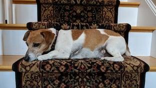 Dog Pixel 2 XL