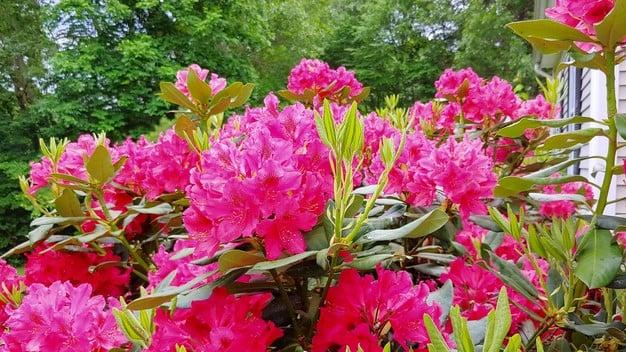 LG G7 Flowers AI Cam