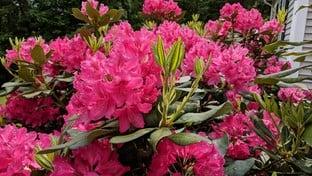 Pixel 2 XL Flowers