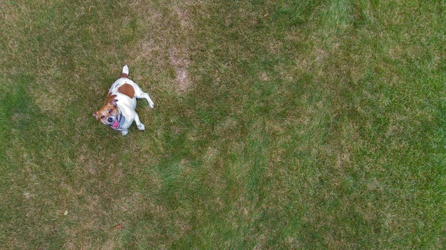 areal dog mavic air shot