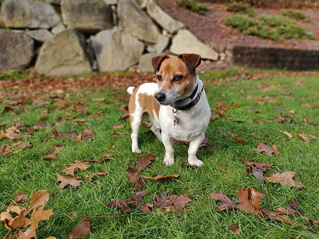 Yogi Dog Portrait Daylight