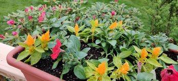 OnePlus 7 Pro Flowers