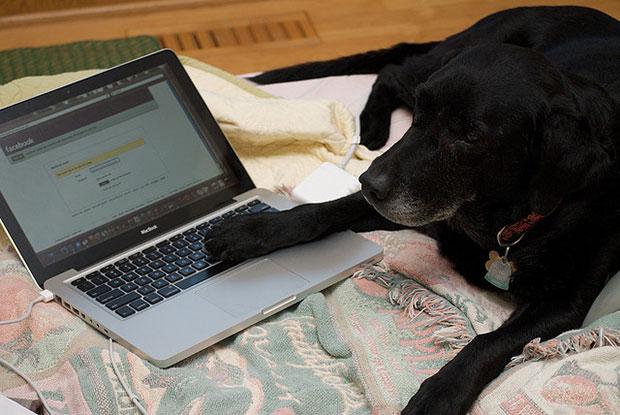 Facebook Dog