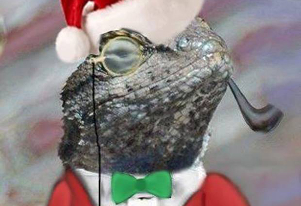 lizard squadcrop