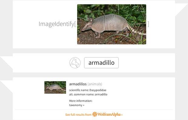 ImageIdentify Armadillo