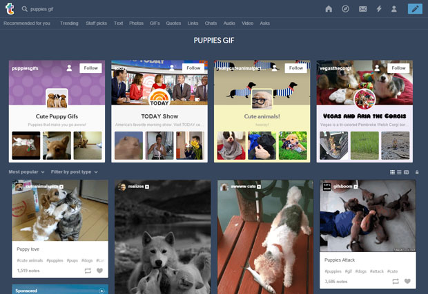 tumblr TV puppies search