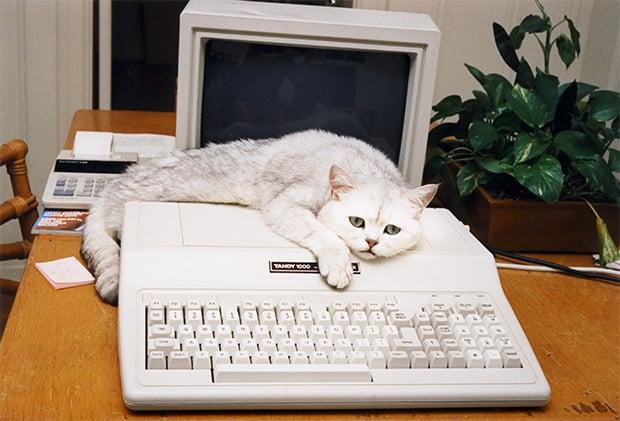 Cat Fix PC