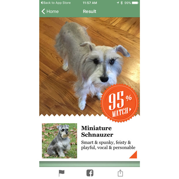 Microsoft Fetch iPhone App Uses Ruff Machine Learning To ID