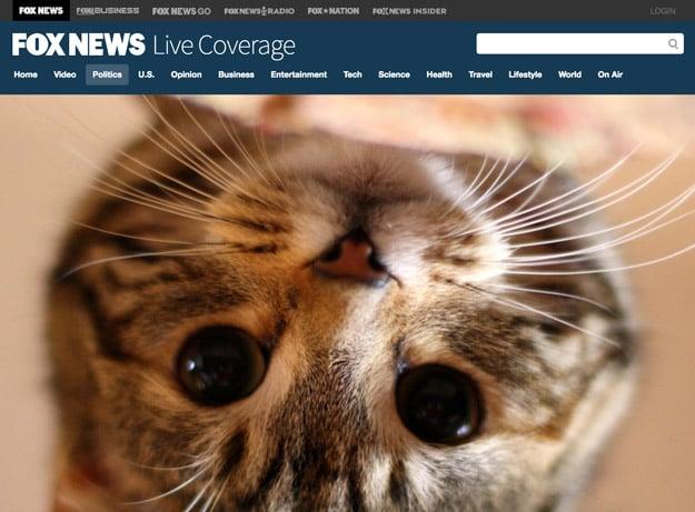 trump kitten 2