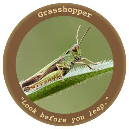 grasshopper cia