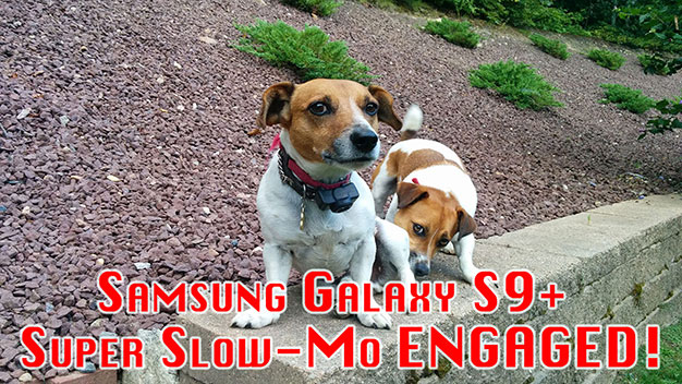 Samsung Galaxy S9 Super Slow-Mo Mode With Jack Russell Terriers
