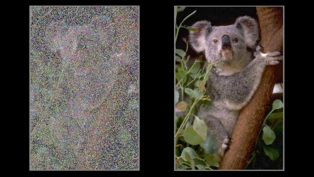 noise2noise koala banner