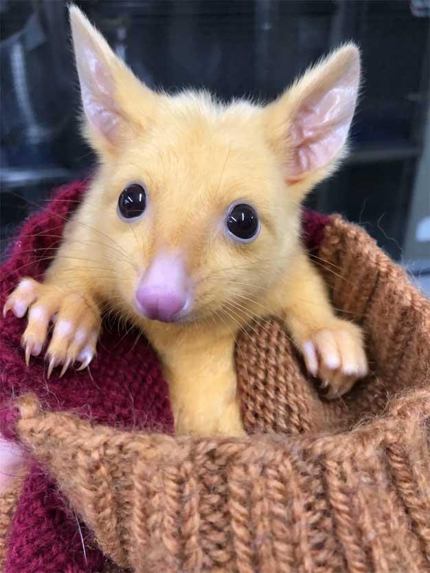 possum sweater