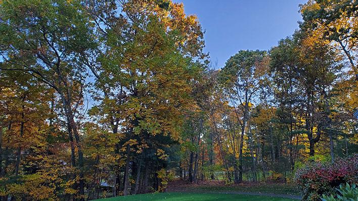 fall foliage note 10