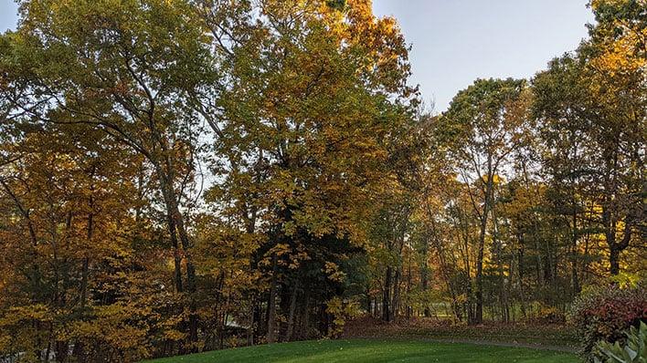 fall foliage pixel 4