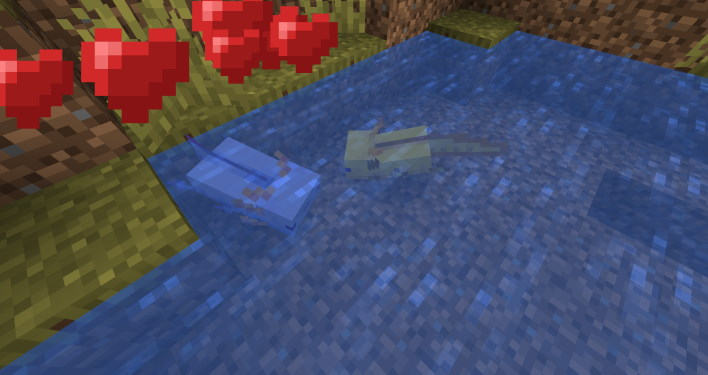 breed blue axolotl sea minecraft 117 how to find axolotl and amethyst grow glow berries and craft a lightning rod