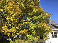 Apple iPad Air 2 Tree Photo