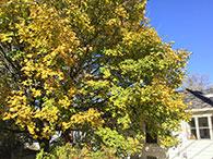Apple iPad Air 2 Tree HDR Photo