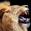 Mac OS X Lion Roars to 1 Million Downloads in First Day