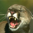 Mac Users Claim Mountain Lion is Killing Battery Life