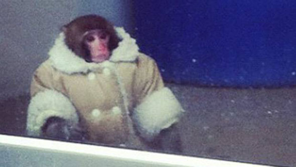 Ikea Monkey Does Not Approve
