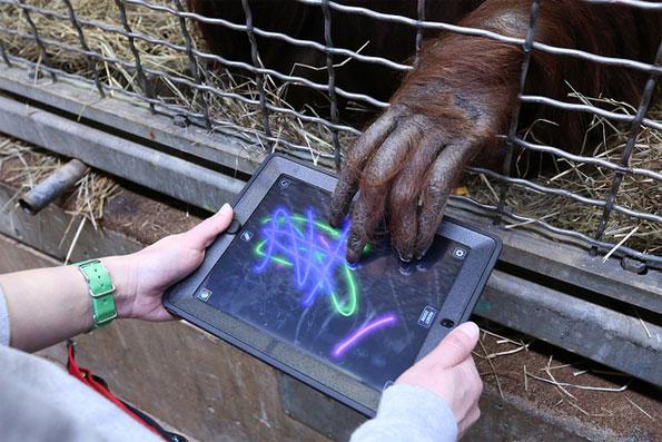 Orangutan iPad