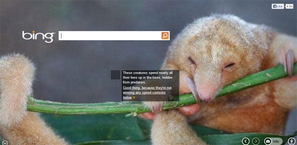 Bing Sloth