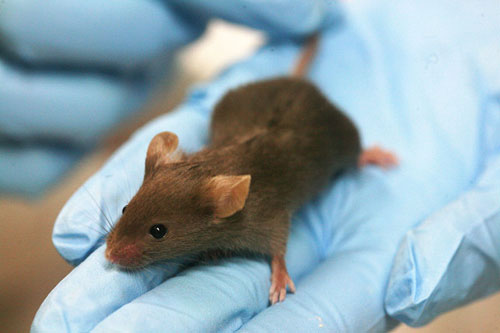 Mouse. Mice are being used to test technology for changing memories.