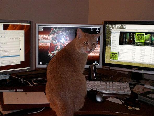 Angry Kitty at Computer