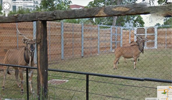 Street View Houston Zoo