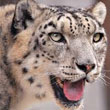 Apple Discontinues Support For OS X 10.6 Snow Leopard Leaving 20 Percent Of Mac Users Ripe For Malware