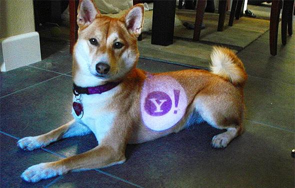 Yahoo Dog