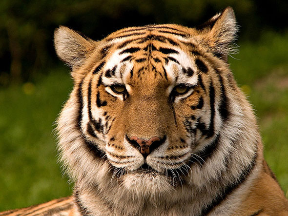 Tiger selfies are getting the boot from New York, thanks to a new law.